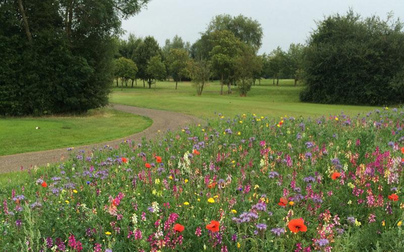 New ryegrass and wild flower mixtures