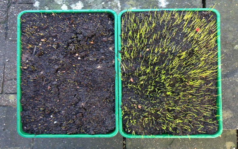 Germin-8: a new grass seed treatment