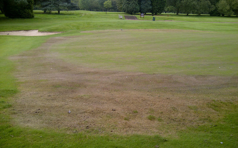 R9 ryegrass quickly brings greens back into play