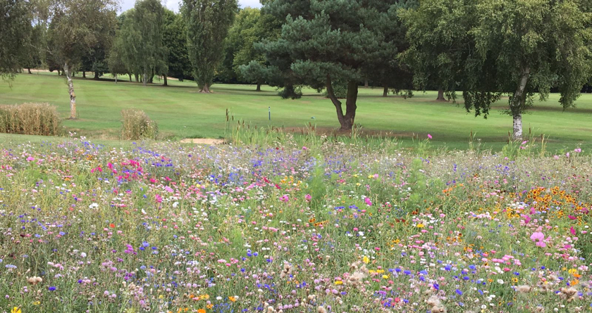 Colour and diversity at Lilley Brook GC