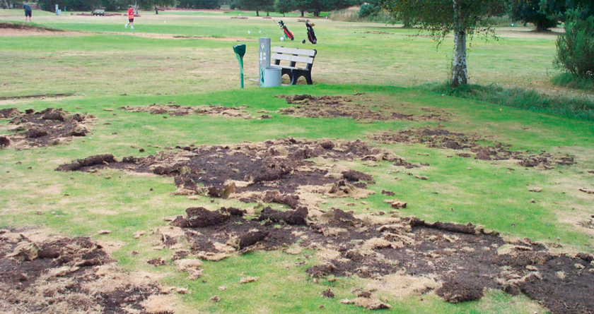 Bayer tackle leatherjackets and chafer grubs