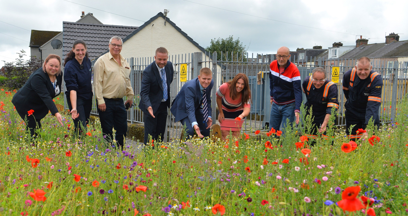 Rigby Taylor's Euroflor urban meadow flowers for Electricity North West