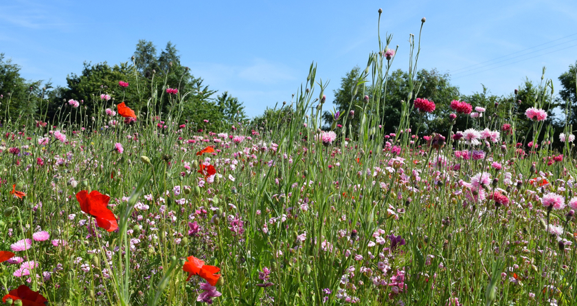 DLF expand their range of wildflower mixtures