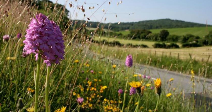 Coronavirus lockdown 'could boost wild flowers'