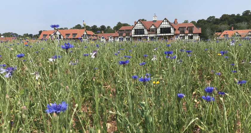 Bespoke DLF Wildflower mix brightens the landscape for HFN