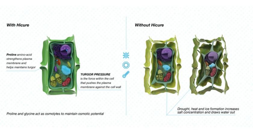 Syngenta launch first biostimulant for turf
